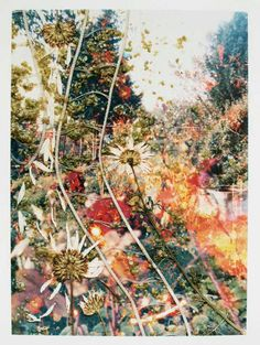 Stephen Gill: Hackney Flowers