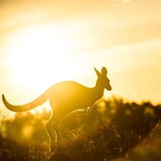Good morning from Canberra! We hope your weekend was full of fun and frivolity. Here in the nation's capital we are enthusiastically jumping into a brand new week. Photo: @damianbreach #visitcanberra #kangaroo #seeaustralia