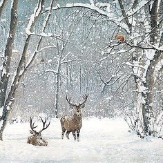 Who ordered the snow? Designed by Jane Crowther. Original Art Photography by Lynnette Henderson. Christmas Scenes, Christmas Pictures, Christmas Art, Winter Christmas, Christmas Landscape, Winter Photography, Art Photography, Landscape Photography, Abstract Landscape