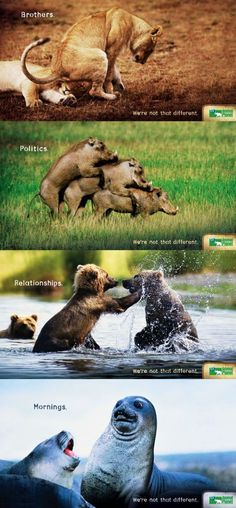 Animals & Humans - We're Not That Different   PBH2