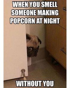 Pug Meme, Dog Jokes, Funny Dog Memes, Really Funny Memes, Funny Dogs, Pug Dogs, Pug Puppies, Memes Humor, Cat Memes
