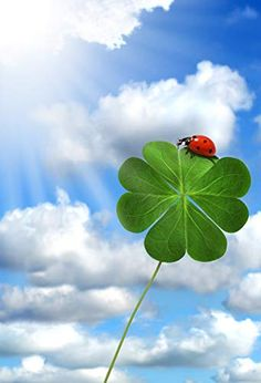 New 5X7FT Lucky Irish Shamrock Backdrop Happy St.Patrick s Day Green Four-Leaf Clover Nature Spring Holiday Vinyl Photography Background Kids Adults Party Decoration Photo Studio Props 02
