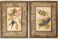 vintage prints in twig frames
