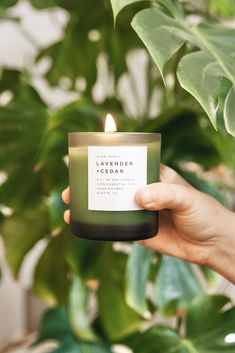 Burn, diffuse, or wash your hands with our herbaceous Lavender + Cedar scent! 🌿 This simple aroma highlights the beauty of nature while creating an atmosphere where you feel grounded, soothed and calm ✨   #handmade #soycandles #aromatherapy #essentialoils #candleaddict #handcrafted #natural #wellness #healthyliving #plantbased #crueltyfree #slownorth #adailyrenewal #shoplocal #madeinaustin Soy Candles, Cruelty Free, Aromatherapy, Highlights, Lavender, Essential Oils, How Are You Feeling, Calm, Hands