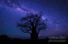 African night sky -Dana Allen