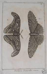 Schmetterling Falter Motte Butterfly Schmetterlinge