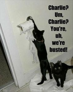 Both of our black cats would shred toilet paper to show their displeasure. Both were the best cats ever :)