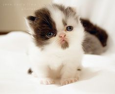 cute cats - Google Search