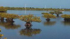 Merritt Island National Wildlife Refuge - U.S. Fish and Wildlife Service