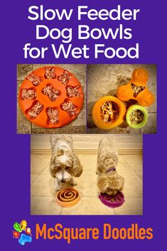 Therapy Dog Training, Dog Training Books, Animal Nutrition, Pet Nutrition, Dog Treat Recipes, Dog Food Recipes, Dog Classes, Living With Dogs, Slow Feeder