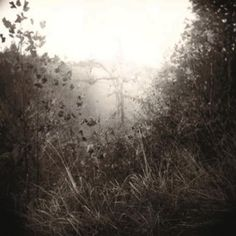 Sally Mann, Untitled 1995. Artspace contemporary artist image for sale
