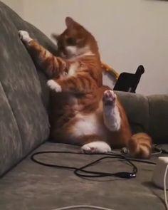 Funny Cute Cats, Cute Cat Gif, Cute Funny Animals, Cute Baby Animals, Animals And Pets, I Love Cats, Crazy Cats, Cute Animal Videos, Cool Pets
