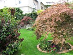 Japonským javorom sa v záhrade darí aj po rokoch Plants, Plant, Planets