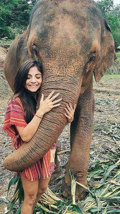 Elephant sanctuary chiang