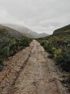 Boesmanskloof / The Lion & The Lady