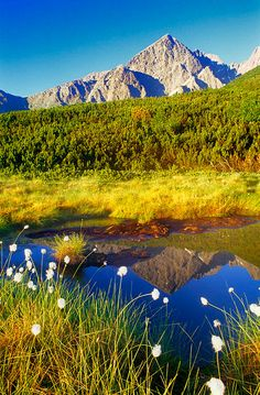 The High Tatras, Slovakia Places To Travel, Travel Destinations, Places To Visit, Bratislava, Beautiful World, Beautiful Places, High Tatras, Poland Travel, Heart Of Europe