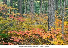Google Image Result for http://image.shutterstock.com/display_pic_with_logo/81999/81999,1255497013,1/stock-photo-fall-colors-in-north-cascades-national-park-washington-state-38828497.jpg