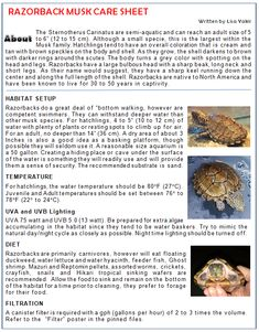Crazy Wonderful World of Aquatic Turtles - Support🐢 has members. Our forum is an interactive and friendly group concentrating on all aquatic. Pet Turtle Care, Musk Turtle, Aquatic Turtles, Skin Specialist, Skin Cleanse, Animal Habitats, Naturally Beautiful, Natural Oils, Body Care