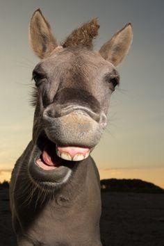lachende dieren - Google zoeken