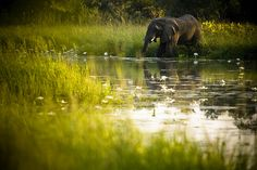 I want to go to Zakouma National Park in Chad to see the elephants