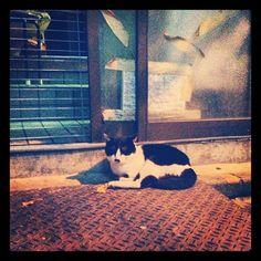 神田の猫。ちょびひげ。 - @blaue_fuchs- #webstagram