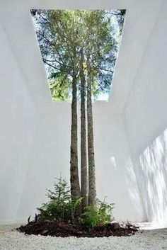 Interior and Exterior Trees #urbanlandscapearchitecture