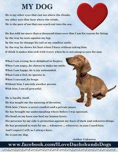 My boy is not a Dauchshund, but this applies to all dogs.