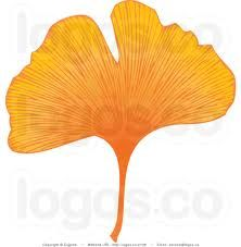 ginkgo leaves - Google zoeken