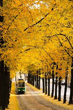 Tram in Helsinki, Finland fall travel photography place to visit and see bucket list ideas colorful fall photos yellow leaves Places Around The World, Around The Worlds, Finland Travel, Best Cities, Alaska, The Good Place, Beautiful Places, Road Trip, Scenery