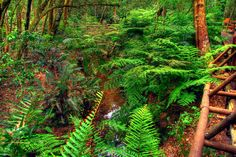 A view of the stream running through the Garden of Eden near Knysna, South Africa Tourism Marketing, Tree Fern, Knysna, South Africa, Exotic, Wildlife, Journey, Amazing, Awesome