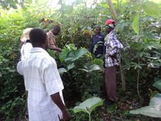 Agroforestry with Ghanaian Cocoa producers