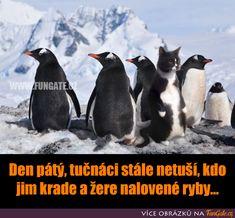 Good Humor, Bugatti Veyron, Penguins, Jokes, Lol, Funny, Animals, Animales, Husky Jokes