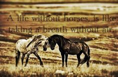 A life without horses is like taking a breath without air. (The comma in the pic isn't needed, but I pinned because the sentiment rules!)