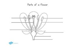 Name structure of a flower label the diagram below complete the w parts of a plant and flower labelling worksheet ccuart Images