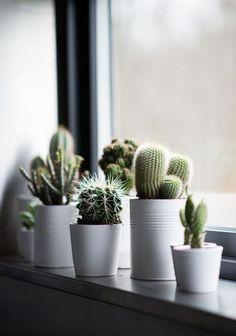 Fensterbank Dekoration - 57 Ideen, wie Sie das Potenzial der Fensterbank entdecken