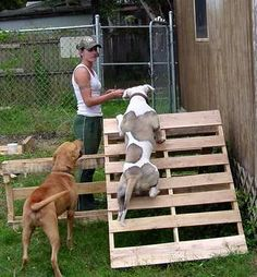 Image result for diy agility course for dogs