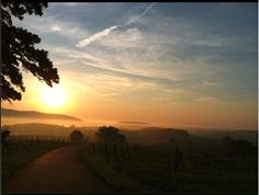 Mt Juliet Vineyards, Crozet VA Monticello Wine Trail, Virginia Wineries, Blue Ridge Mountains, Blank Canvas, Charlottesville, Wine Country, Small Towns, Vacations, Vineyard