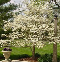 77 Best Trees And Focal Points Images Plants Shrubs