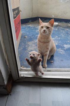 「仕方ないから帰ってきたわ」 「ぱぱー、あーけーてー。」