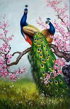 Art Print Animals Peacock oil painting Picture Printed on canvas 16X24 Inch P043