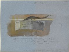 Ruskin, John - Drawing of a Lizard and Cartellino from Carpaccio's