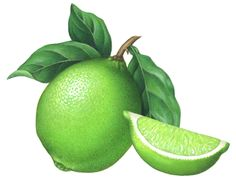 Botanical illustration of a lime with leaves and a lime wedge.