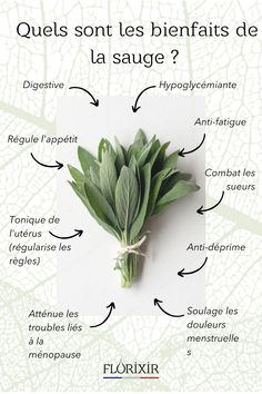 Healing Herbs, Medicinal Herbs, Health And Beauty, Health And Wellness, Fuerza Natural, Health Matters, Green Day, Yoga, Permaculture