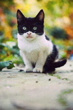 Masked Cat by *arslansinan on deviantART