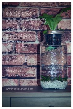 Stylish design for a desktop mason jar aquaponics system. Grow an organic herb garden or salad greens from GreenPLUR. Fish poop and plants.