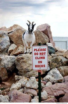 please do not climb on rocks