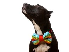 224bf65d9816b Dressing Your Dog – How to Make Your Dog Look Stylish and Fashionable