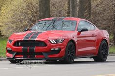 Image result for mustang gt 350