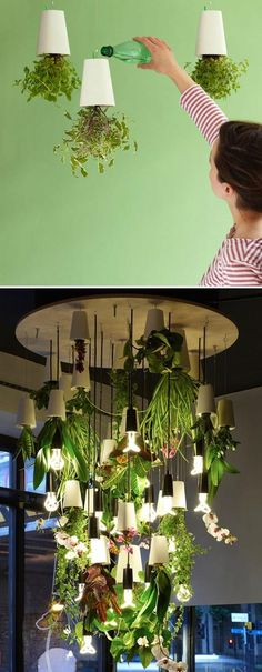 30 Amazing DIY Indoor Herbs Garden Ideas THis makes my windowsill herb garden look pathetic! This herb chandelier thing is absolutely fantastic. Hydroponic Gardening, Container Gardening, Organic Gardening, Indoor Gardening, Gardening Tips, Vegetable Gardening, Herb Garden Indoor, Water Garden, Indoor Herb Planters