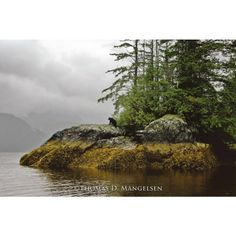 Guardian of Knight Inlet - $375.00
